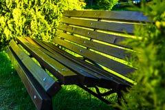 长凳在夏天公园 特写镜头 库存图片