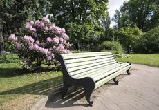 长凳在有开花植物的庭院里 免版税库存照片