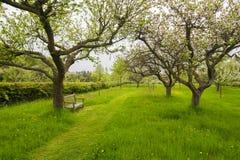 长凳在果树园庭院里 库存照片