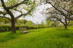 长凳在果树园庭院里 免版税库存照片