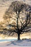 长凳在树129下 图库摄影