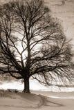 长凳在树132下 免版税库存照片