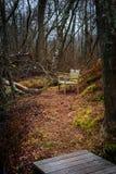 长凳在森林里 免版税库存照片