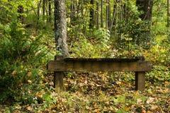 长凳在森林 库存照片