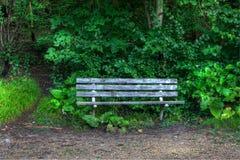 长凳在森林 免版税库存照片
