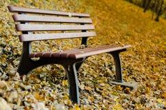 长凳在森林 库存图片