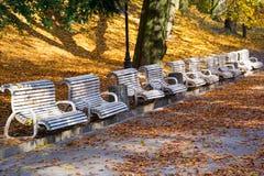 长凳在秋天公园 秋天背景秋天叶子结构树黄色 库存照片