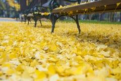 长凳在秋天公园 免版税库存图片