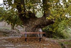 长凳在秋天森林 库存图片