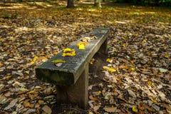 长凳在秋天 库存照片
