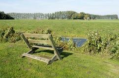 长凳在草甸。 库存照片