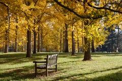 长凳在银杏树树丛弗吉尼亚树木园 库存图片