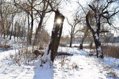 长凳在雪结构树都市冬天附近报道了横向 库存图片