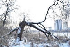 长凳在雪结构树都市冬天附近报道了横向 库存照片