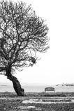 长凳在结构树下 库存图片