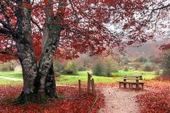 长凳在autum的公园 免版税库存照片