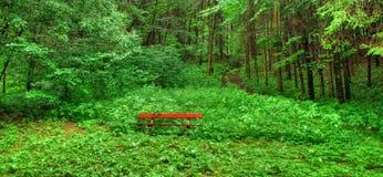 长凳孤立森林地 免版税图库摄影