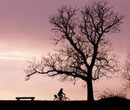 长凳树和自行车剪影 图库摄影
