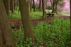 长凳森林 库存照片