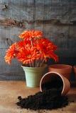 长凳溢出的花匠土壤 免版税库存照片