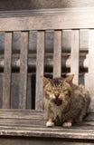 长凳猫老坐的打呵欠 免版税库存图片