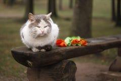 长凳猫郁金香 图库摄影