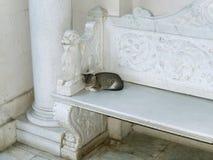 长凳猫 库存照片