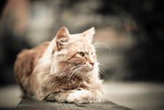 长凳猫 图库摄影