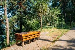 长凳由竹子制成在有变化的豪华的植被的一个美丽的夏天公园 图库摄影