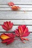 长凳秋天留给槭树木 免版税库存照片