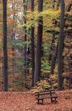 长凳秋天 库存照片