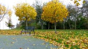长凳空的公园 图库摄影