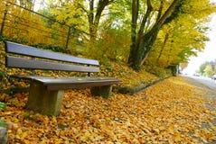 长凳空的金黄叶子 库存照片