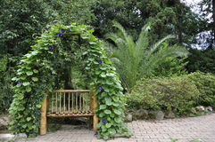 长凳纠缠的植物 库存照片