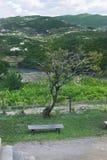 长凳结构树 免版税图库摄影