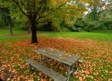 长凳野餐 免版税库存照片