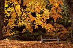 长凳金黄光 库存图片
