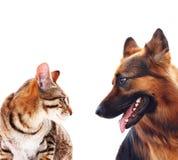 长发德国牧羊犬狗和猫。 免版税库存照片