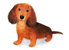 长发达克斯猎犬 额嘴装饰飞行例证图象其纸部分燕子水彩 库存照片