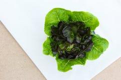 长叶莴苣和紫色莴苣 免版税库存图片