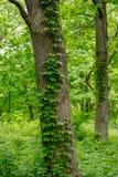 长大一个树干的叶子在野花庭院里 免版税库存照片