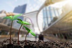 长大从在被弄脏的城市的土壤的年轻绿色新芽有软的阳光背景 库存图片