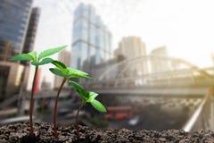 长大从在被弄脏的城市的土壤的年轻绿色新芽有软的阳光背景 免版税库存图片