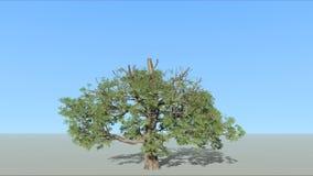 长大的树 库存例证