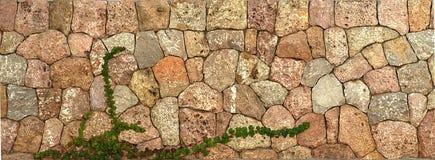 长大石墙的植物 库存图片