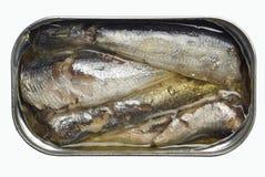 长头小沙丁鱼 库存图片