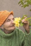 年长妇女嗅到的黄色玫瑰花 免版税库存图片
