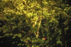 长平底船乘驾通过在神秘的雨林的树梢 免版税库存照片