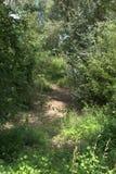 长得太大和变干的雨水保留池塘在夏天 免版税库存图片
