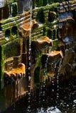 长得太大的古老生苔喷泉 免版税库存照片